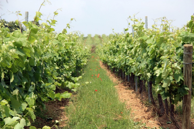 laroca-vinyes